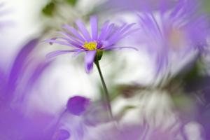 Swaying in Purple by Heidi Westum