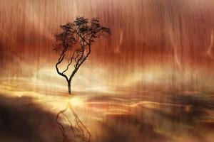 The lonely tree by Heidi Westum