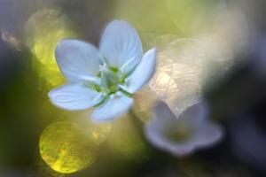 Through the Light by Heidi Westum