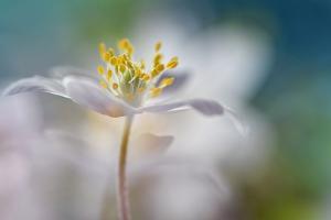 White Color Dream by Heidi Westum