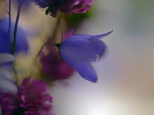 Wild Flowers by Heidi Westum