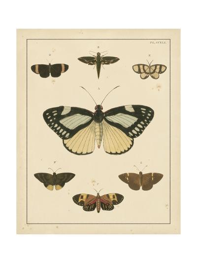 Heirloom Butterflies II- Cramer-Art Print