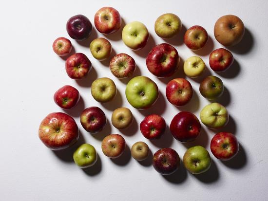 Heirloom Varieties of Apples-Rebecca Hale-Photographic Print