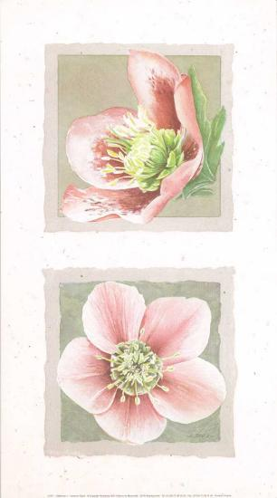 Hélébores I-Laurence David-Art Print