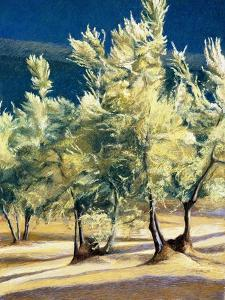 Olive Trees in Italy by Helen J^ Vaughn