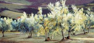 Olive Trees in the Evening by Helen J^ Vaughn