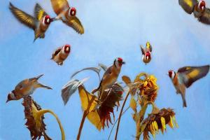 A Charm of Goldfinches painting by Helen White