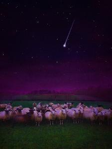 Flock by Night, 2019, by Helen White