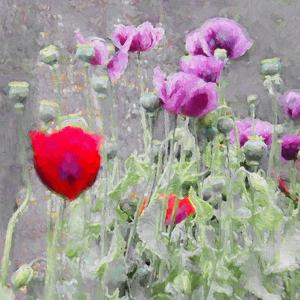 Poppies, 2018 by Helen White