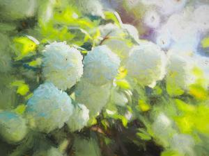 Softly Blooming by Helen White