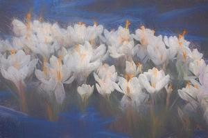 Spring Crocuses, 2018 by Helen White