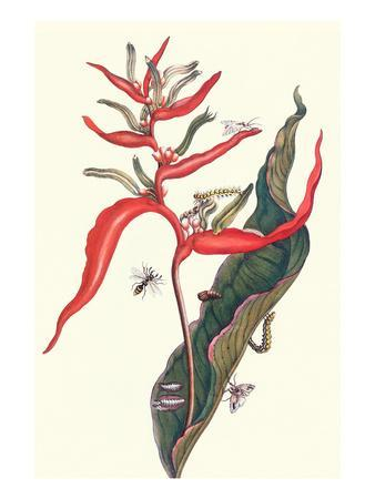 Heliconia and Potter Wasp-Maria Sibylla Merian-Art Print