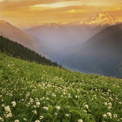 Hellebore and Sitka Valerian, Glacier Peak Wilderness, Washington, USA-Charles Gurche-Photographic Print