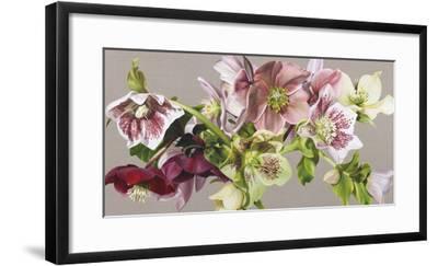 Hellebore Melody - Fawn-Sarah Caswell-Framed Art Print