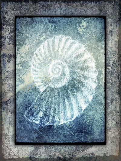 Hello Beach Shell I-LightBoxJournal-Giclee Print