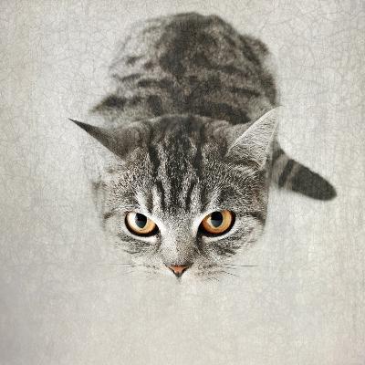Hello Kitty-Nadia Attura-Photographic Print
