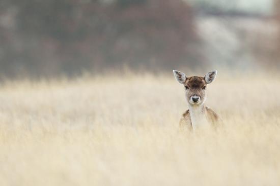 Hello!-MarkBridger-Photographic Print
