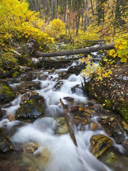 Hellroaring Creek Decked Out in Autumn Color Near Whitefish, Montana, Usa-Chuck Haney-Photographic Print
