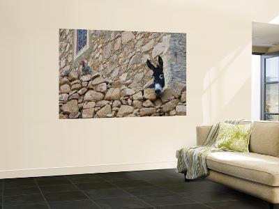 Hen and Donkey, Tizgui, Anti-Atlas Mountains-Aldo Pavan-Wall Mural