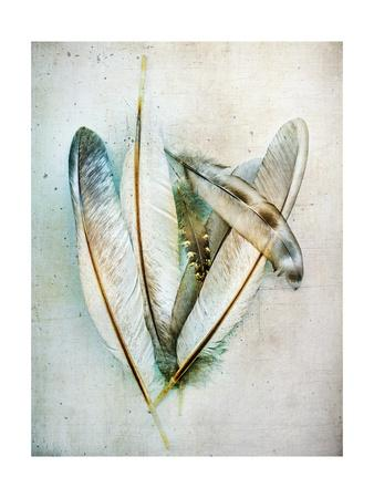 https://imgc.artprintimages.com/img/print/hen-feathers_u-l-q1bvtbn0.jpg?p=0