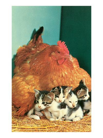 Hen Sitting on Kittens--Art Print