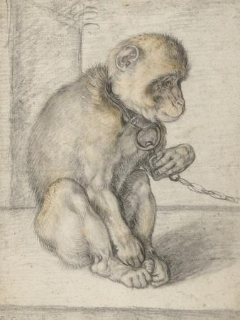 A Seated Monkey on a Chain, 1592-1602
