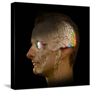 Brain And Vision, Artwork by Henning Dalhoff