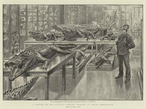 A Sketch in the Natural History Museum at South Kensington by Henri Lanos