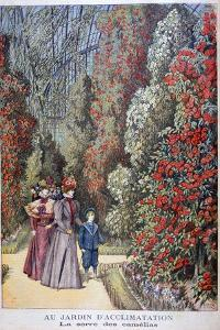 The Greenhouse of the Camellias, Zoological Gardens, Paris, 1897 by Henri Meyer
