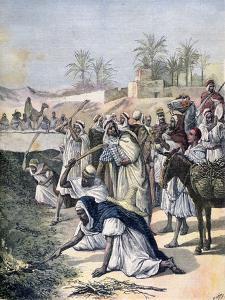 The Locust Plague, Algeria, 1891 by Henri Meyer