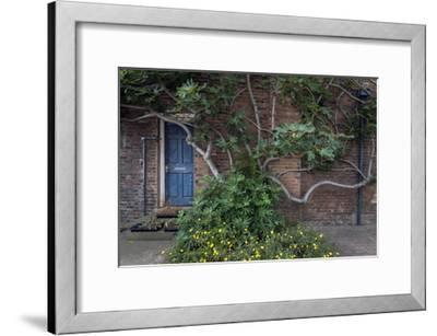 Fig Tree Against Brick Wall Blue Door