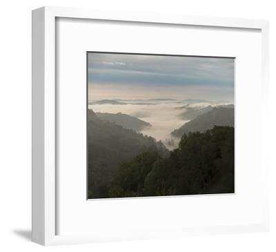 Oakland Redwood Park, East View Morning Fog 3