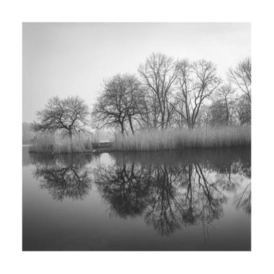 Prospect Park Lake In Morning - Brooklyn Landscape