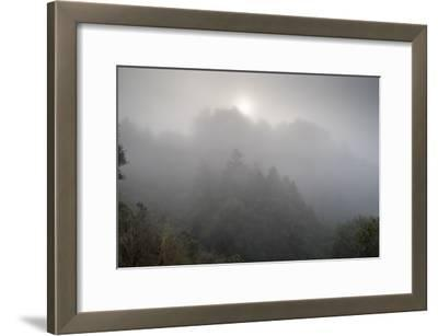 Rewood Park Fog And Sun Morning 1