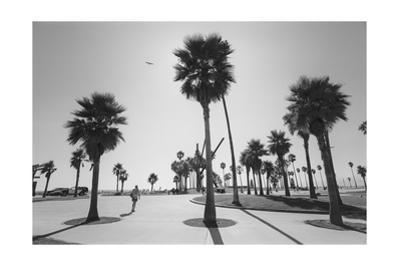 Venice Beach Palm Trees - Los Angeles Beaches by Henri Silberman