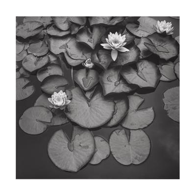 Water On Lily Pads - Brooklyn Botanic Gardens by Henri Silberman