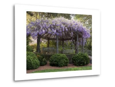 Wisteria Arbor, Duke Gardens, Durham, NC (Purple Spring Flowers)