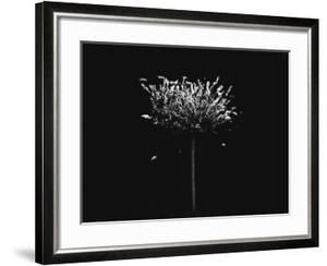 A Small Solitary Tree by Henriette Lund Mackey