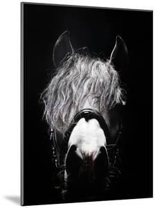 Frontal Head Portrait of Grey Horse by Henrik Sorensen
