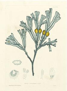 Luminous Seaweed II by Henry Bradbury