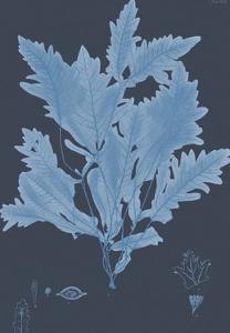 Vintage Seaweed - Crest by Henry Bradbury