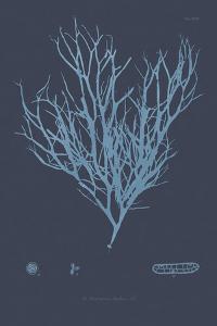 Vintage Seaweed - Swell by Henry Bradbury