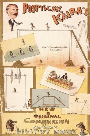 """Pospischil Kaira's """"Lilliput Dogs"""""""