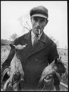 A Cotswolds Farmer Holds Two New-Born Lambs by Henry Grant