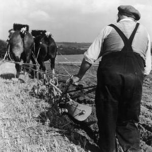 Ploughing Contest 1950s by Henry Grant