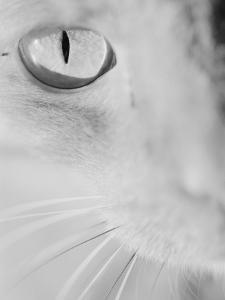 Cat's Eye by Henry Horenstein
