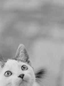 Cat's Head by Henry Horenstein