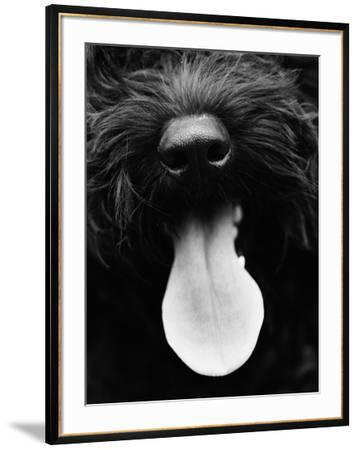 Dog Panting by Henry Horenstein