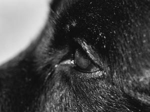Dog's Eye by Henry Horenstein