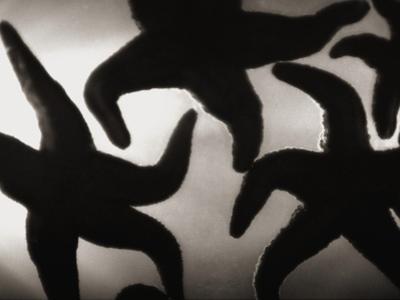 Group of Starfish by Henry Horenstein